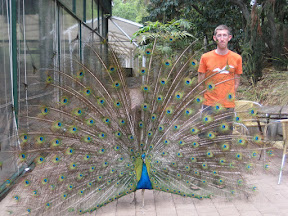 Me and a peacock