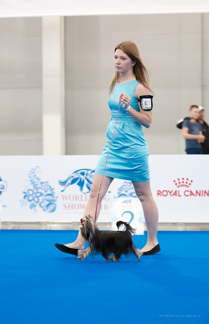 World Dog Show-2016 0155
