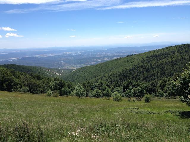 Pas de la Graille, biotope de Parnassius apollo provincialis. Montagne de Lure (1600 m), (Vaucluse), 23 juin 2015. Photo : J.-M. Gayman