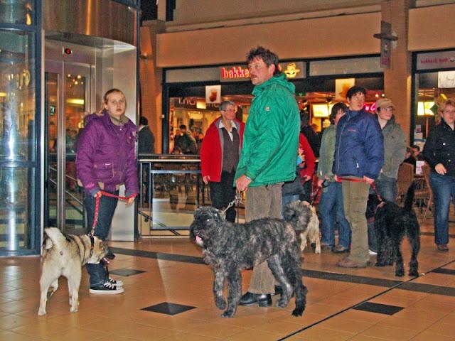 KNON puppys in de stad nov 2008 - in%25252520de%25252520stad%252525202.jpg