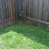 Gardening 2010 - 101_1718.JPG