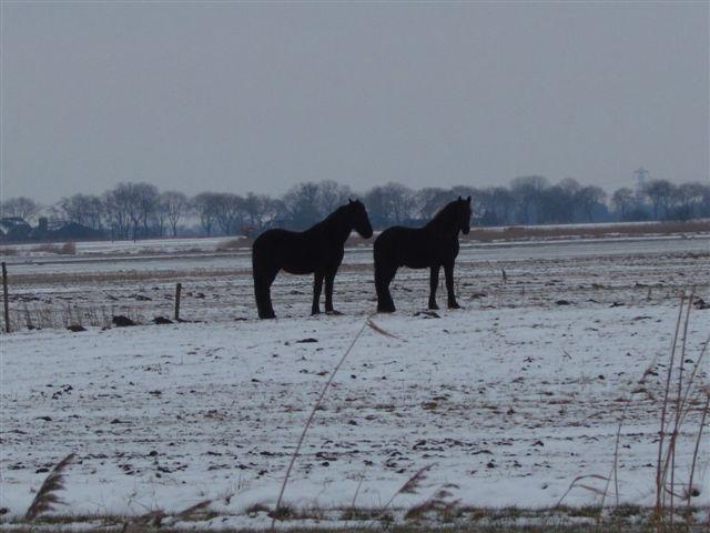 Winterkiekjes Servicetv - Ingezonden%2Bwinterfoto%2527s%2B2011-2012_76.jpg