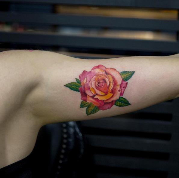 Esta linda rosa