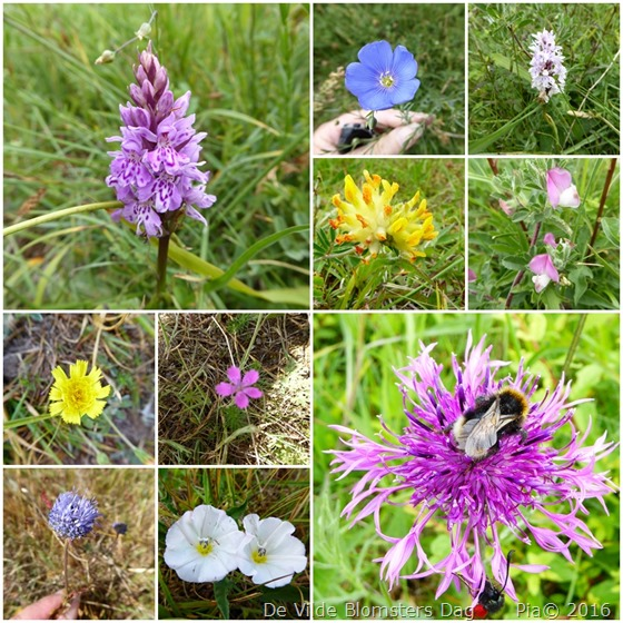 De Vilde Blomsters Dag på Høvblege