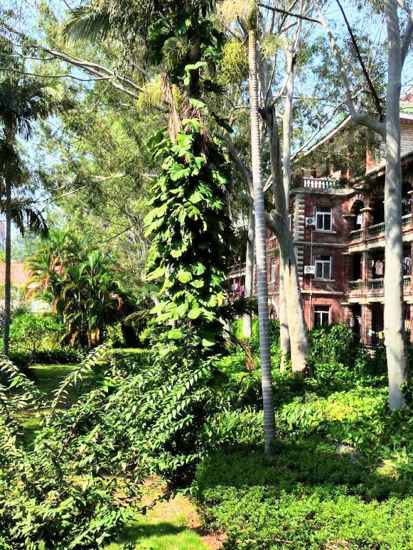 Xiamen.Dans le campus