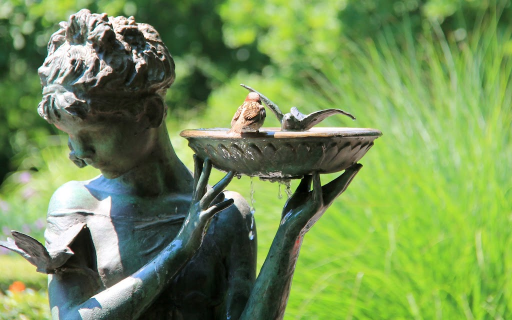 Bird taking a bath in the bird bath