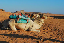 wadi-es-sebua-to-dakka-camels
