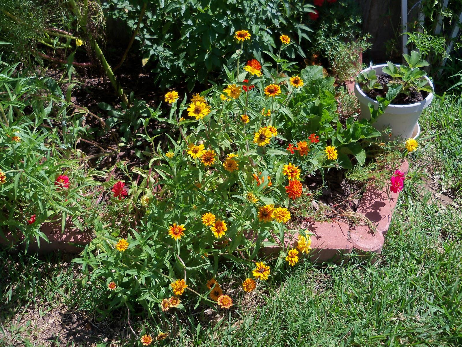 Gardening 2010, Part Three - 101_4363.JPG