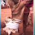 Casal é preso por maus-tratos após amarrar explosivo em cachorro