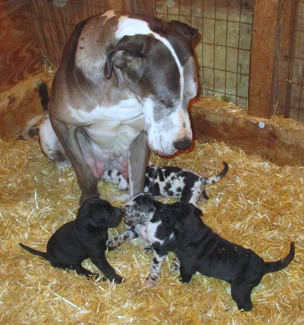 Savanna & her babies @ 3 weeks