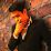 Erick Rubio's profile photo