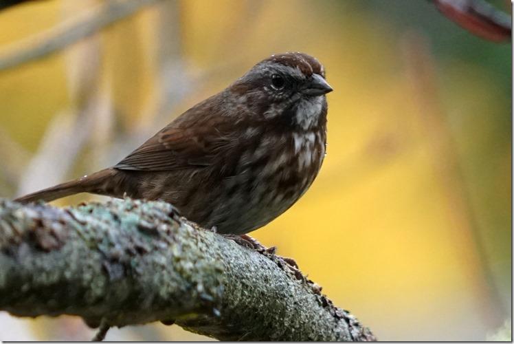 lopez sparrow 110217 00000