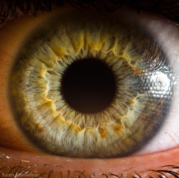 human eyes 1 (2)