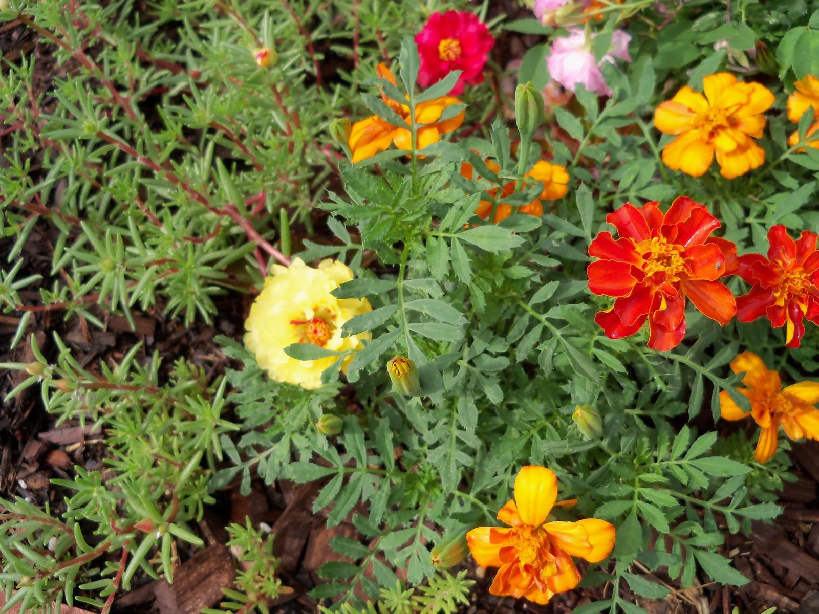 Gardening 2010, Part Two - 101_2183.JPG