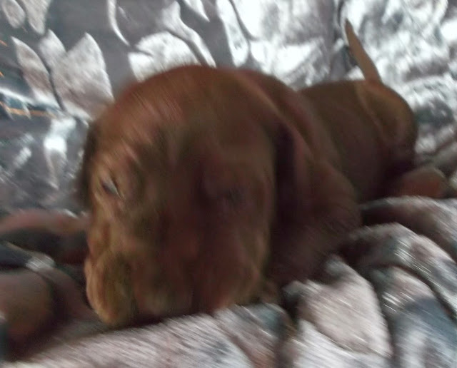 available dark chocolate male