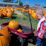 Pumpkin Patch - 115_8274.JPG