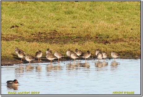 Slimbridge WWT - December