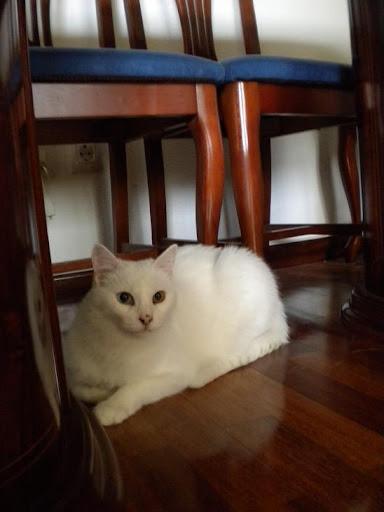 Yuna en su casita DSCN5517