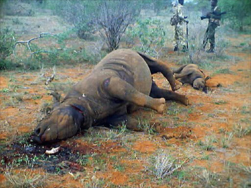 A dead rhino and calf killed by poachers. File photo.