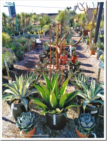 151230_Tucson_Mesquite-Valley-Growers_0034