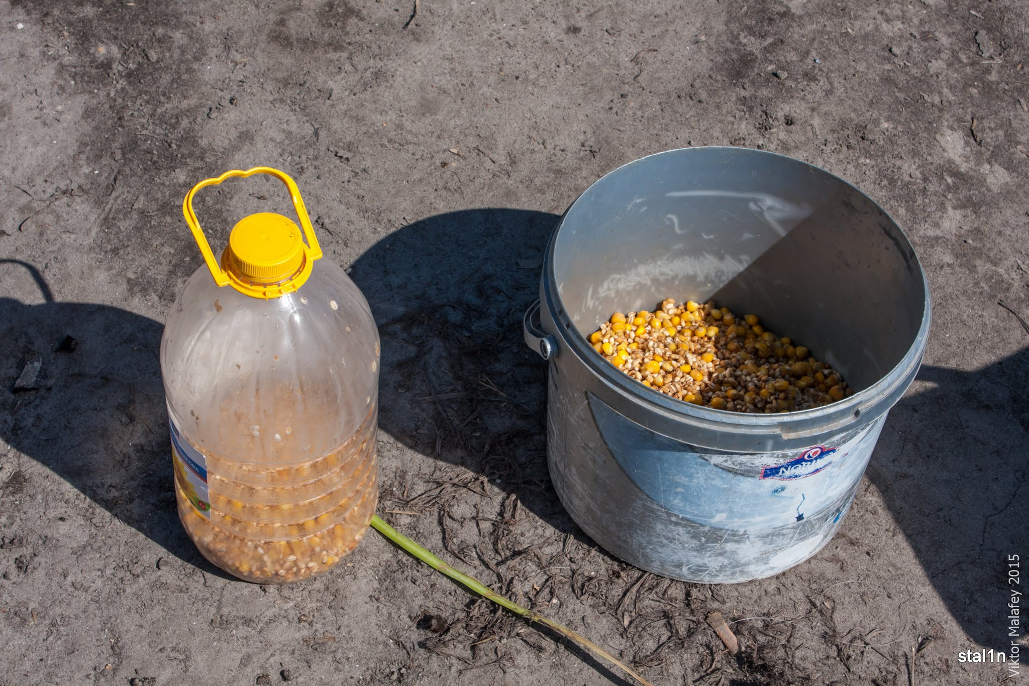 Готовим кукурузу для рыбалки правильно