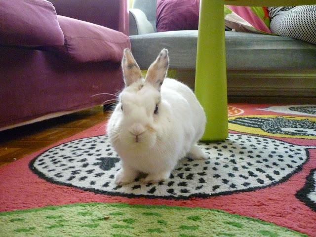 Mirana, lapine blanche-[adoptée] Mirana22