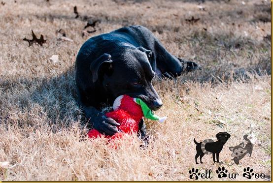 Matt TOT January 30th (copyright Bell Fur Zoo)