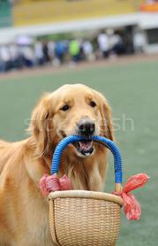 cachorro cesta