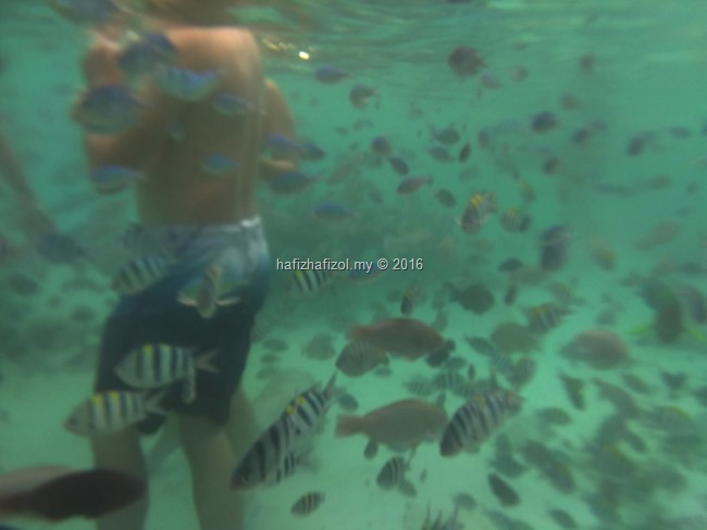 pulau redang snorkeling