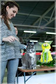 cats-show-24-03-2012-fife-spb-www.coonplanet.ru-041.jpg