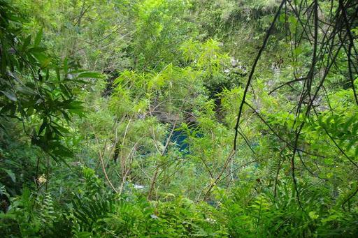 Vers la cascade du Trou Noir.