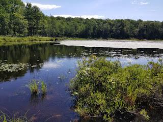 Abbey Pond