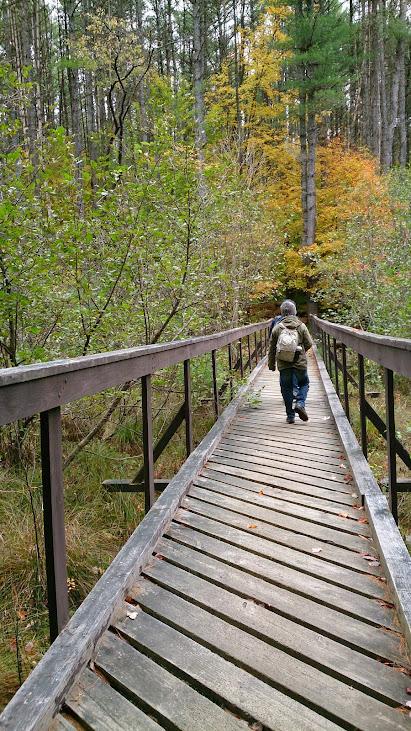 森林裡唯一的人工步道