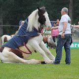 Paard & Erfgoed 2 sept. 2012 (14 van 139)