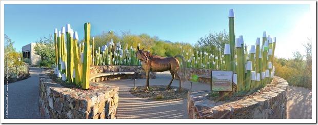 12/30/15: Tohono Chul Park, Tucson, AZ