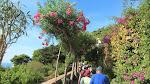 Gorgeous lane towards the Augustus Gardens