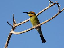 wildlife-birds-5.jpg