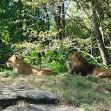 Pittsburgh Zoo Revisited - DSC05109.JPG