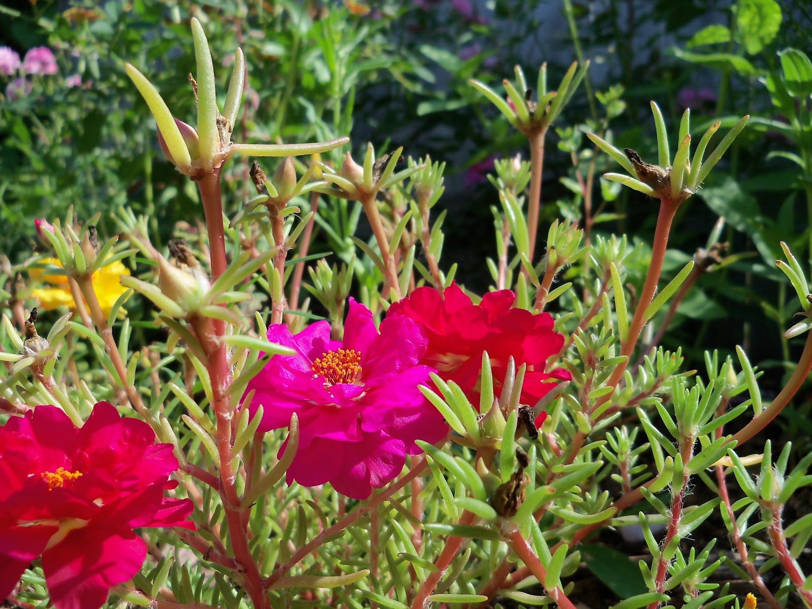 Gardening 2010, Part Two - 101_2594.JPG