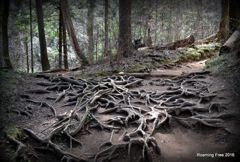 Crazy tree roots