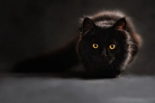 Brand New! Cat Language Bible (tm) How To Finally Speak Cat