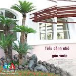TieuCanh00002.jpg