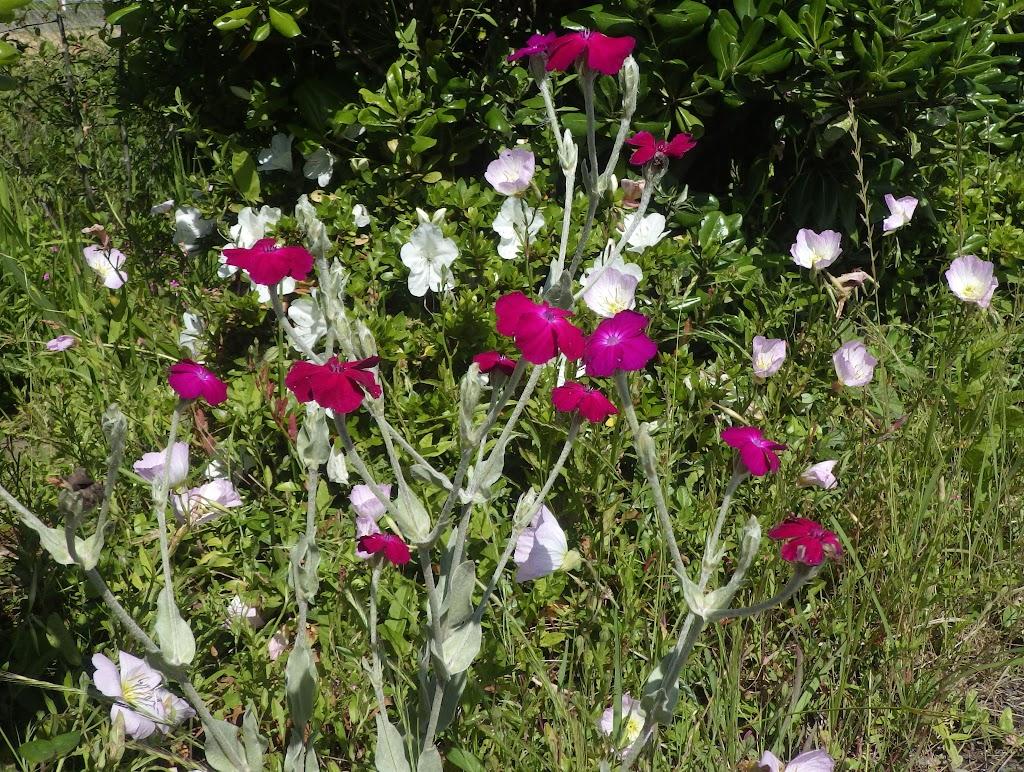 花の写真 全体像
