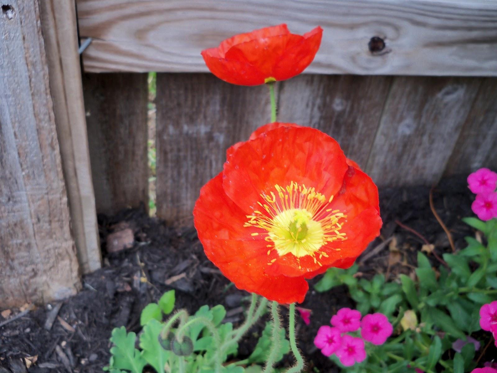 Gardening 2011 - 100_7261.JPG