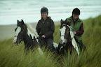 Horses in grass.jpg