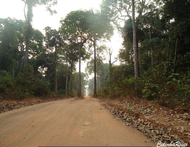 Piste forestière entre Itauba et Marcelândia (Mato Grosso, Brésil), 6 septembre 2010. Photo : Cidinha Rissi