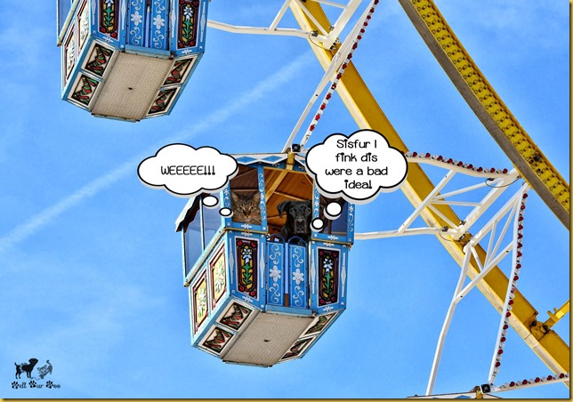 Matt & Matilda on Ferris Wheel Memorial Day post (©Bell Fur Zoo)
