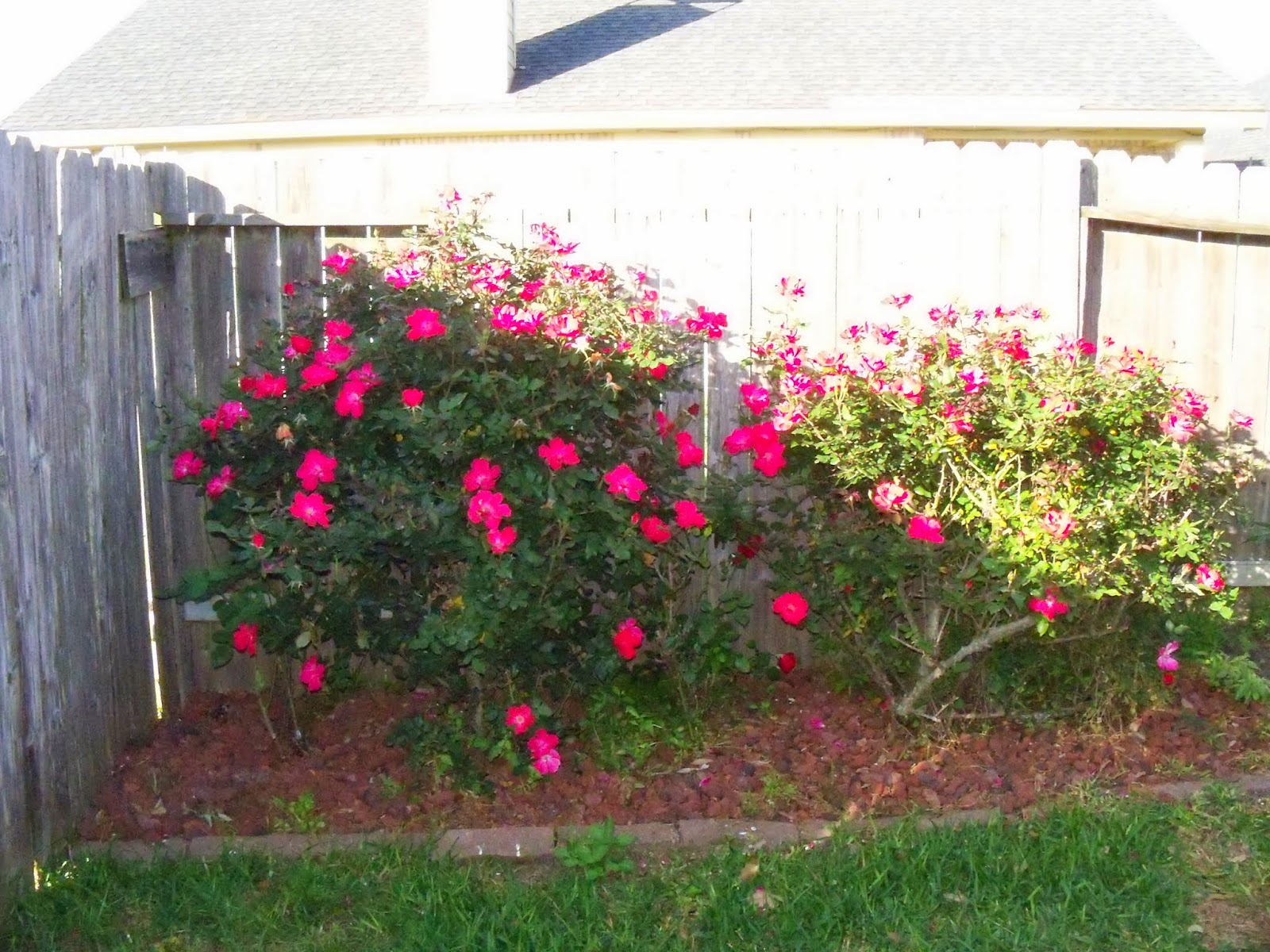 Gardening 2015 - 116_7681.JPG