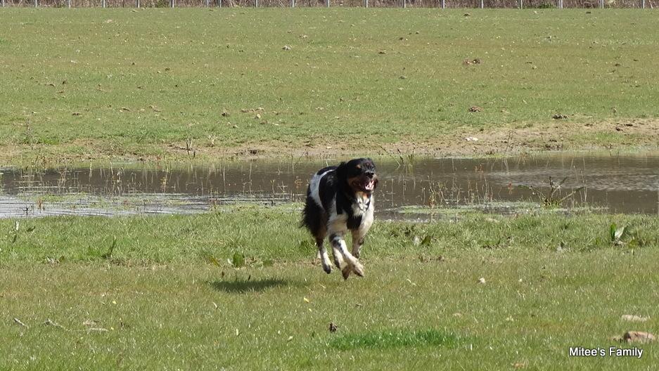Balades canines en Nord (59)/Pas de Calais (62) - Boulogne-sur-Mer, Calais et Lille - Page 4 DSC01878-001