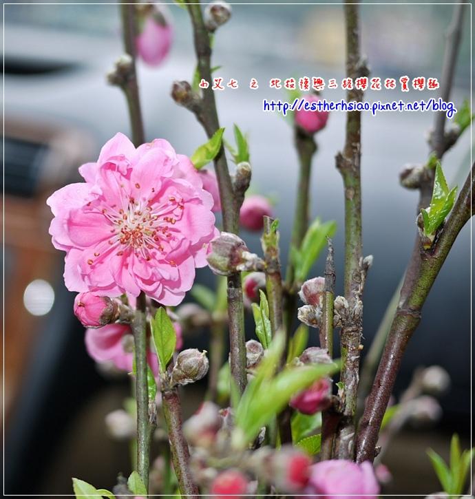 70 台北杏花